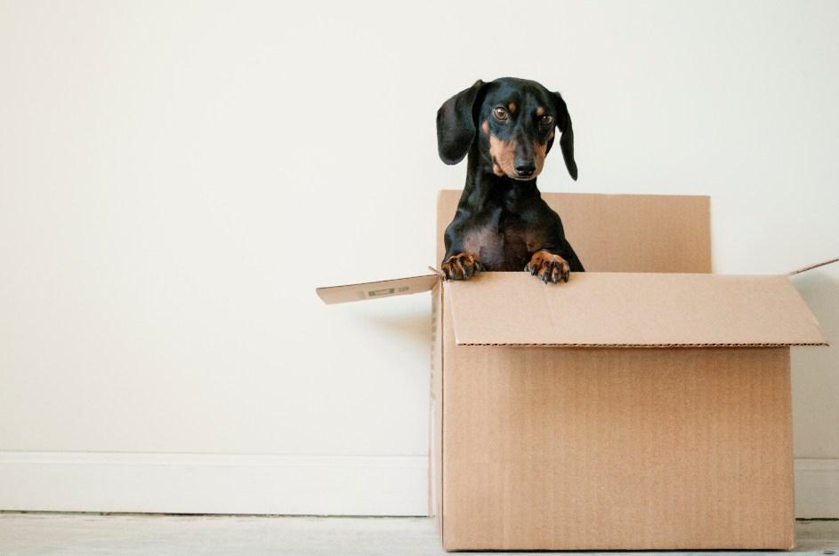 Pas u kutiji za selidbu